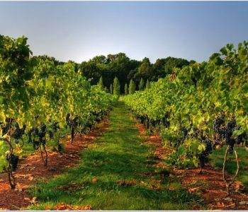 new-jersey-wineries2