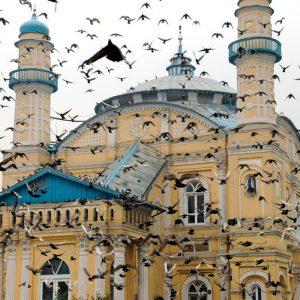 حضور کبوتران در اطراف مسجد شاه دو شمشیر
