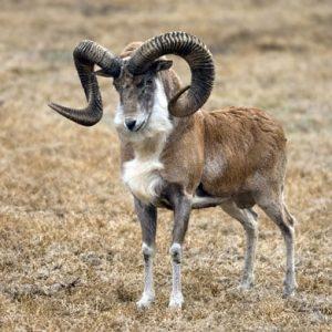 تصویر یکی از حیوانات این منطقه گردشگری
